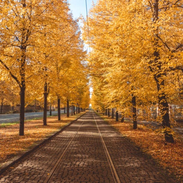 Tramvajová trať - Královský letohrádek v podzimním období